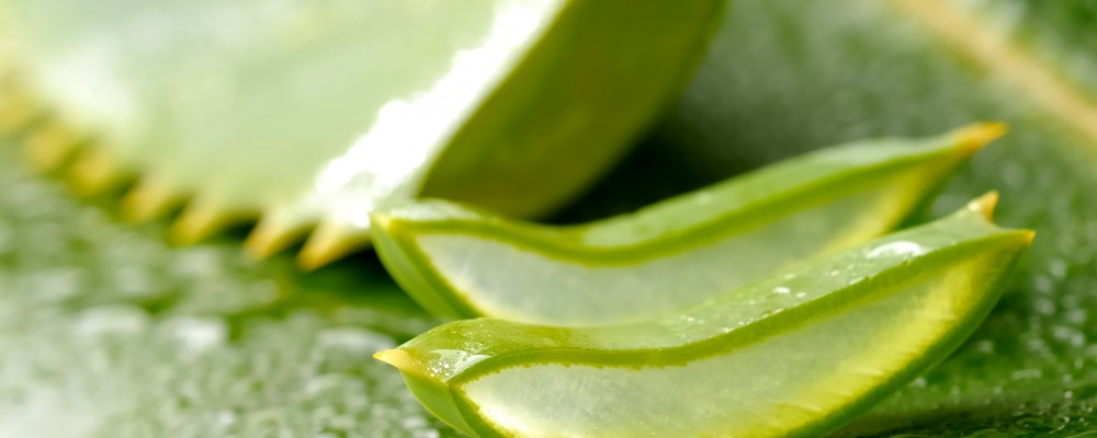 Aloe-vera-juice-health-benefits