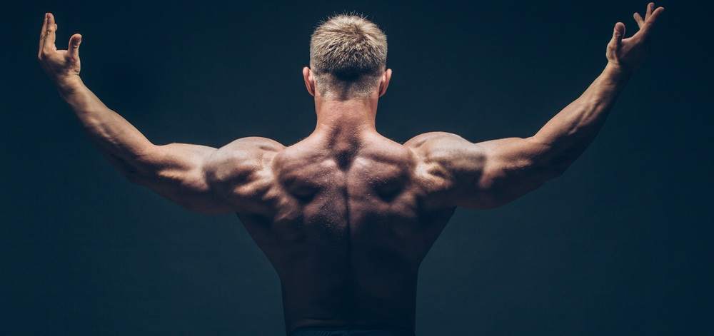 prohormone for muscles