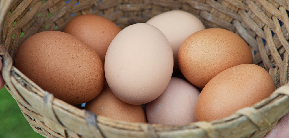 How To Extend the Shelf Life of Eggs
