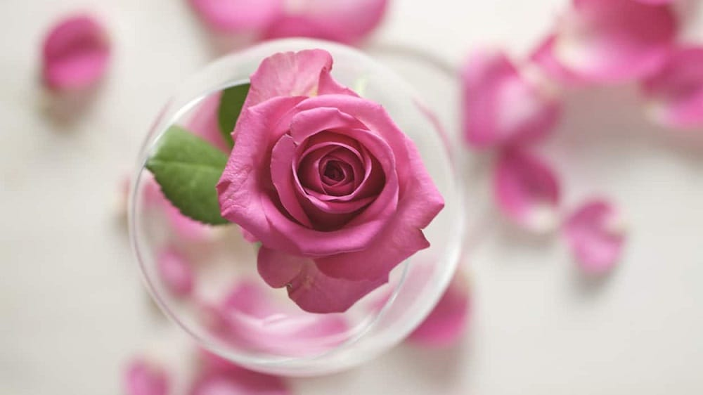 Rose water for eye care